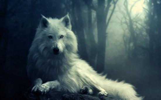 توبه ی گرگ...