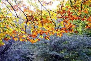 دلایل علمی تغییر رنگ درختان در فصل پاییز