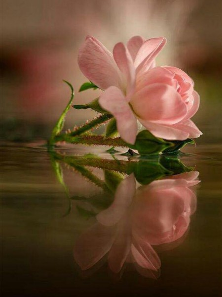 یک شاخه گل معجزه میکند