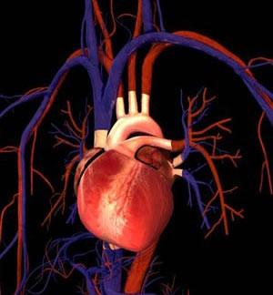 چگونگی کار کردن دستگاه گردش خون