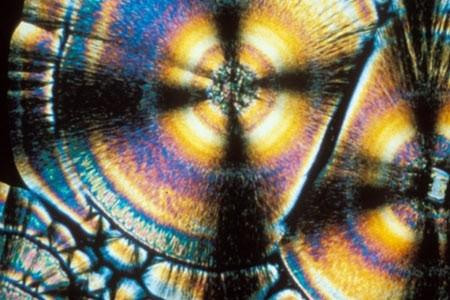 ویتامین ها زیر میکروسکوپ چه شکلی هستند؟
