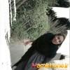 yasi_21_12