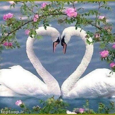 دوست داشتن....