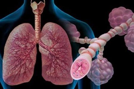 قطعیترین راه درمان مشکلات تنفسی در این گیاه نهفته است + طرز تهیه…